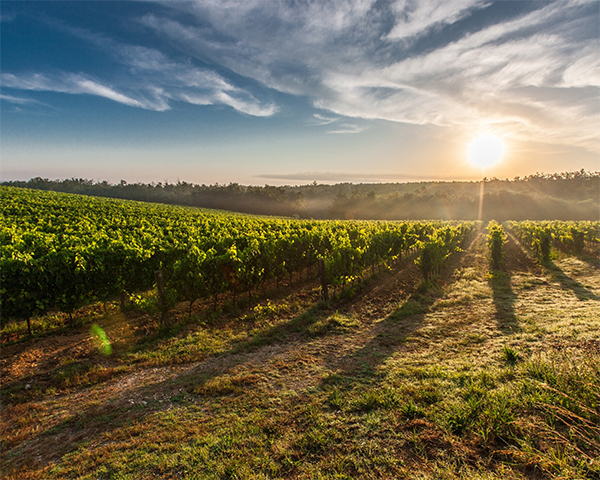 promotions vins pour les vendanges dans le gers