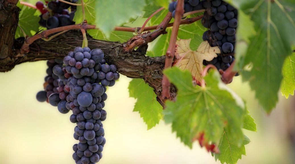 acehter du vin rouge esquiro du domaine de la higuere